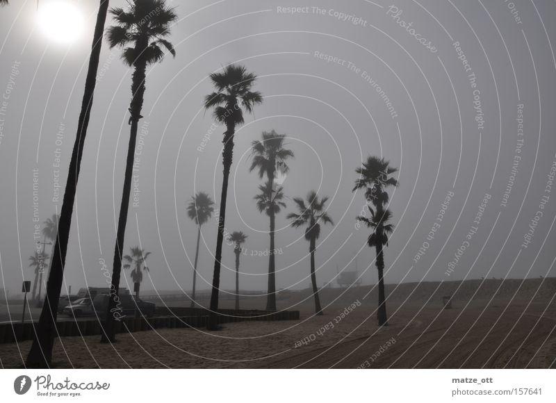 Palmen im Nebel Himmel Baum Sonne Strand Ferien & Urlaub & Reisen Küste Wetter USA Kalifornien Los Angeles