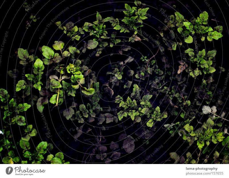 out of the dark grün Pflanze Blatt dunkel Hintergrundbild Tapete tief graphisch Meerestiefe Unterwasseraufnahme dunkelgrün Wasserpflanze