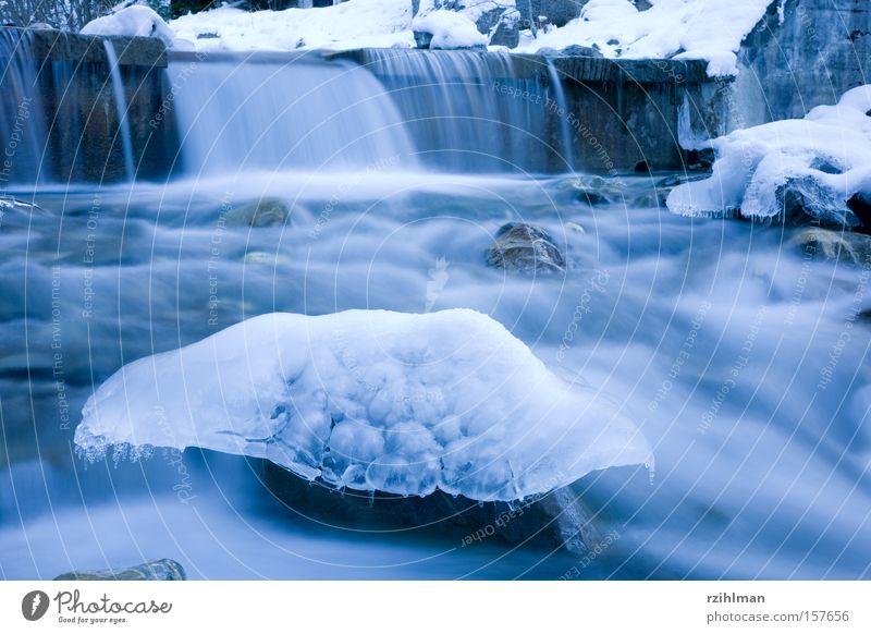 Flusspilz Natur kalt Eis frisch Frost gefroren Skulptur Bach bewegungslos Eisskulptur
