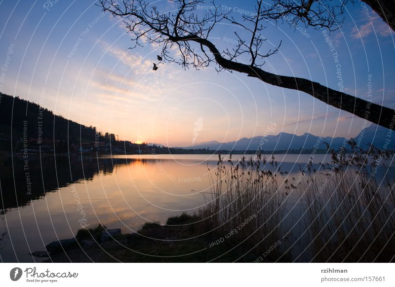 Der Tag erwacht Sonne ruhig Erholung See Landschaft frisch Frieden Idylle Schilfrohr Bayern aufwachen