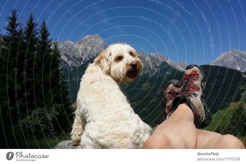 Glück in den Bergen Gesundheit sportlich Erholung Freizeit & Hobby Ferien & Urlaub & Reisen Ausflug Freiheit Sommer Sommerurlaub Berge u. Gebirge wandern Pause