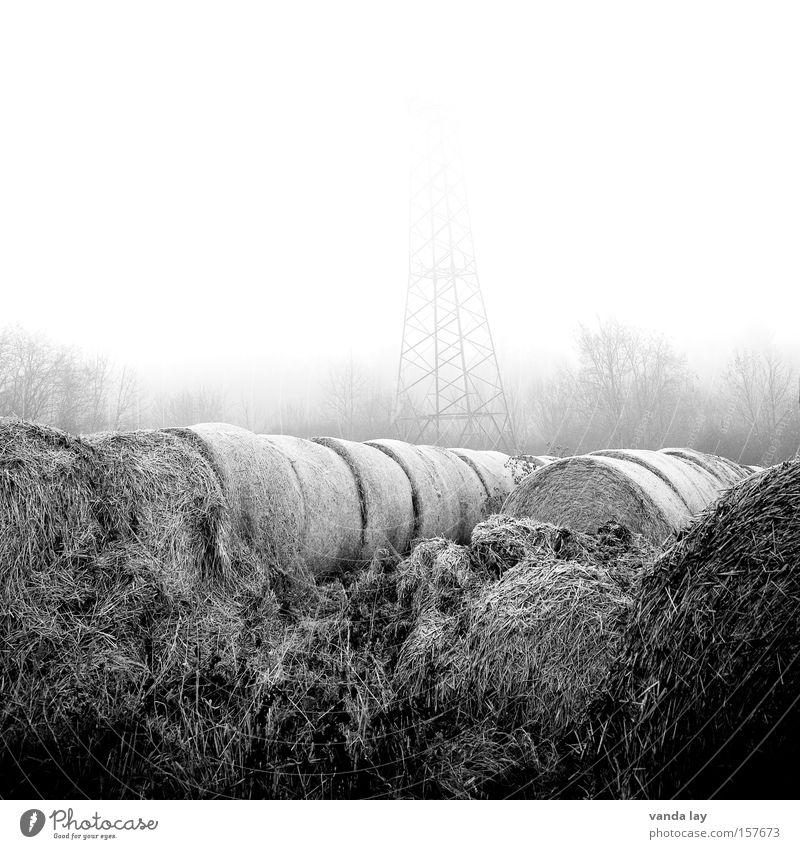 Neblig Feld Stroh Landwirtschaft rund Strohballen Heuballen Schwarzweißfoto Natur Umwelt Elektrizität Stimmung Morgen grau Einsamkeit Strommast Winter