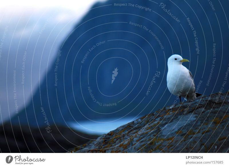 Was guckst du? Ferien & Urlaub & Reisen Tourismus Ferne Freiheit Meer Berge u. Gebirge Natur Tier Wasser Vogel 1 beobachten genießen schön blau rot Glück Leben