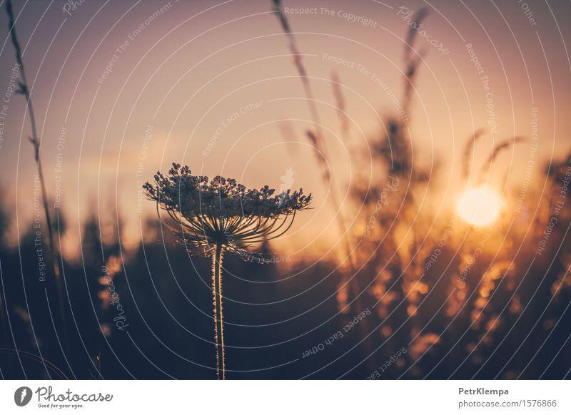 Blume und Sonnenuntergang Himmel Natur Pflanze Sommer Herbst Frühling Erde orange Wetter Sträucher Klima Schönes Wetter