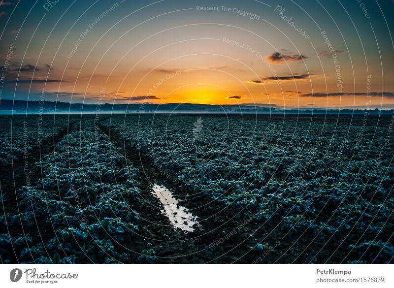 Sonnenaufgang über dem Feld Natur Landschaft Pflanze Erde Himmel Sonnenuntergang Sonnenlicht Frühling Herbst Gras Nutzpflanze blau gelb grün orange Farbfoto