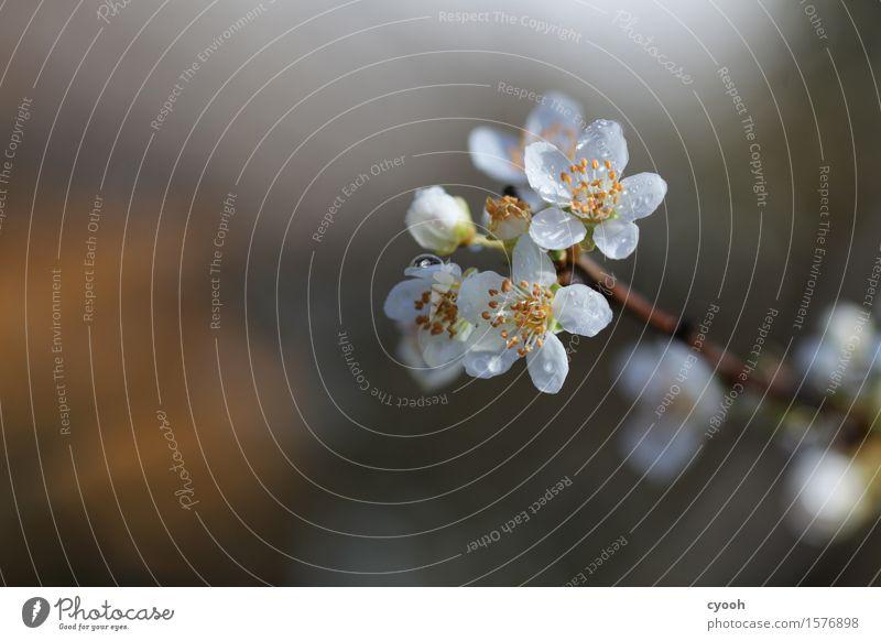 die Schönheit des Frühlings Natur Pflanze Baum Blume Blüte Blühend Duft Wachstum frisch rund weich gelb weiß Lebensfreude Frühlingsgefühle Vorfreude Beginn