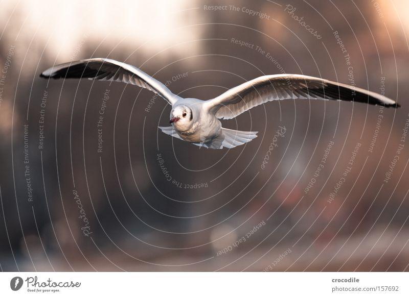 kommt ein vöglein geflogen... schön Freiheit Luft Vogel fliegen frei Geschwindigkeit Luftverkehr Feder Flügel Schweben Schnabel Tier gleiten
