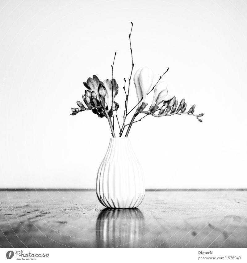 Klassisch Pflanze weiß Blume Blatt schwarz Blüte grau Sträucher Blumenstrauß Vase Blumenvase Blumenstengel
