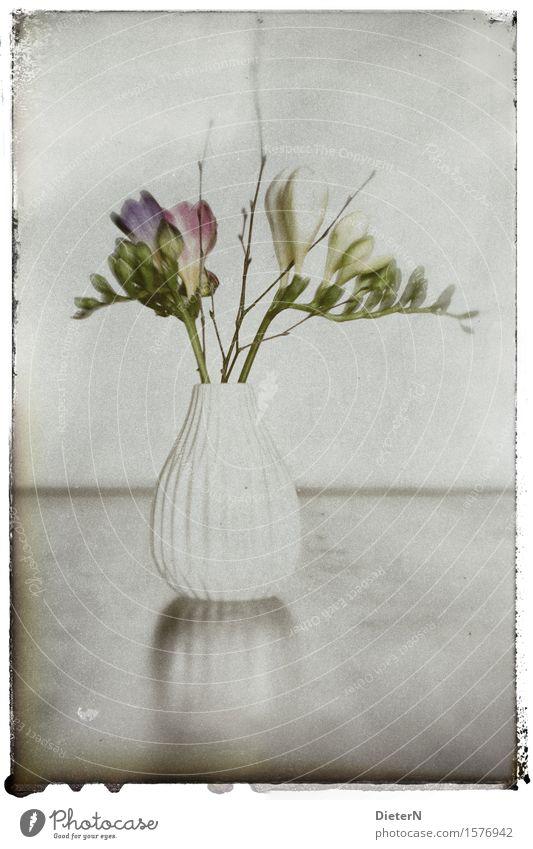 Y Pflanze Blume Blatt Blüte grau grün weiß retro Retro-Farben Blumenvase Farbfoto Gedeckte Farben Innenaufnahme Studioaufnahme Nahaufnahme Detailaufnahme