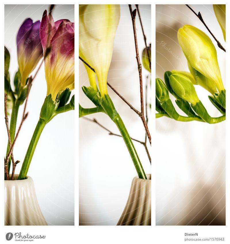 Dreierlei Pflanze Blume Blatt Blüte gelb grün weiß Vase Freisteller Blumenstrauß Blumenstengel Triptychon Farbfoto mehrfarbig Innenaufnahme Studioaufnahme