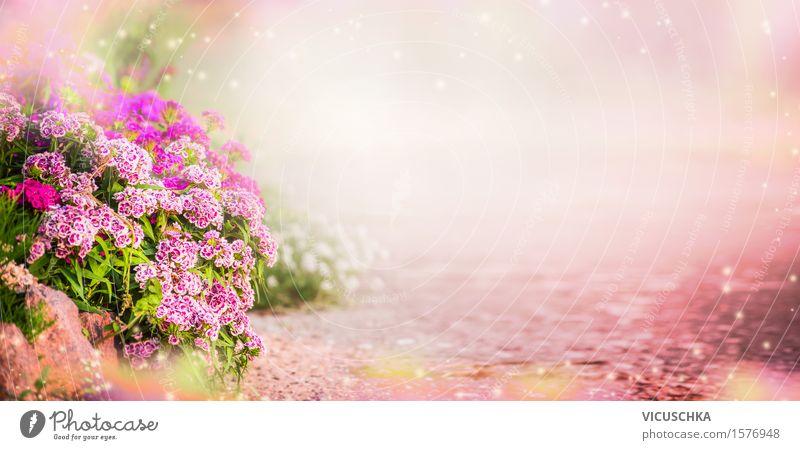 Garten Hintergrund mit rosa Blumen Lifestyle Design Sommer einrichten Dekoration & Verzierung Natur Pflanze Sonnenlicht Frühling Herbst Schönes Wetter Gras
