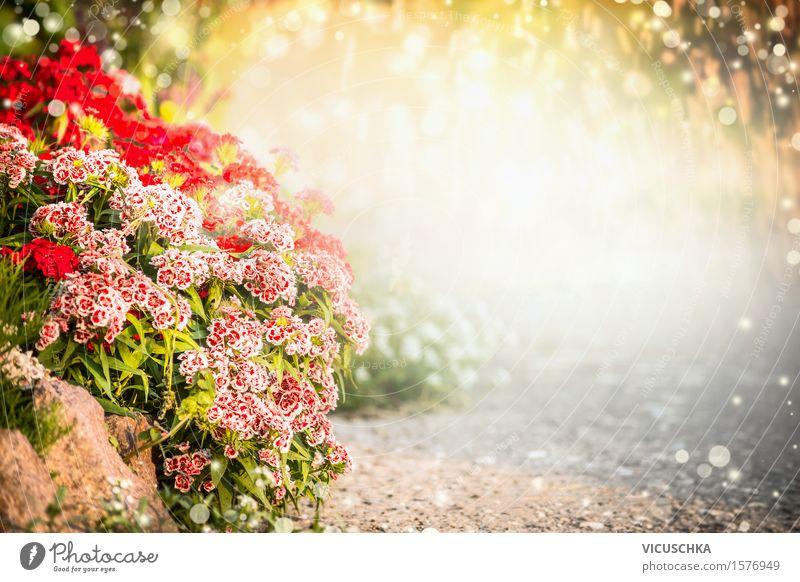 Türkische Nelke BlumenBett im Sommer Garten Natur Pflanze Blatt gelb Blüte Herbst Frühling Gras Stil Hintergrundbild Lifestyle rosa Design