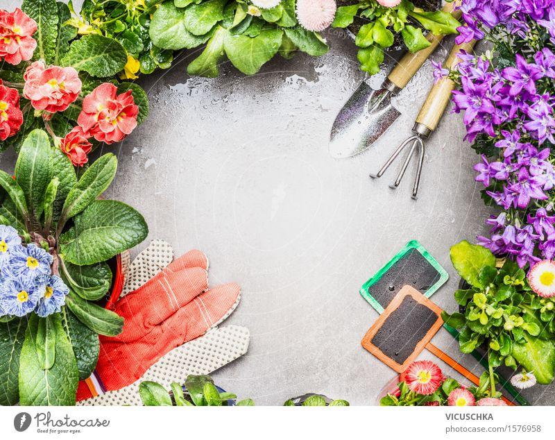 Gartengeräte und frische schöne Topf Blumen Stil Design Freizeit & Hobby Sommer Häusliches Leben Dekoration & Verzierung Tisch Natur Pflanze Frühling Herbst