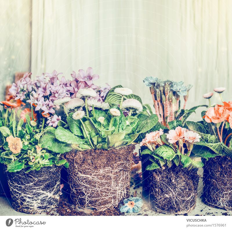 Blumen für Bepflanzung im Garten oder Töpfe Natur Pflanze Sommer Blatt Blüte Herbst Frühling Stil Design Häusliches Leben Freizeit & Hobby Erde