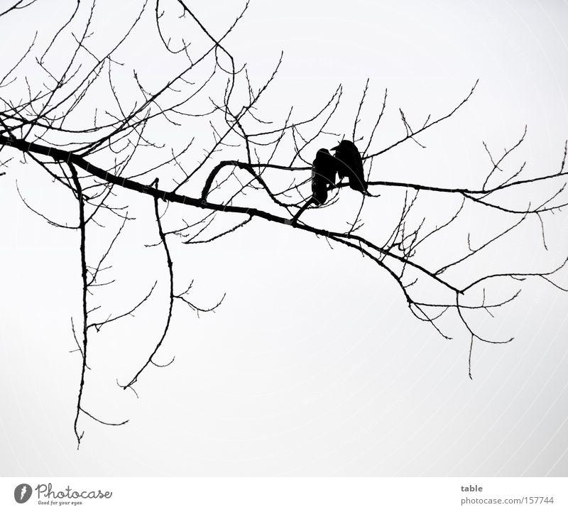 Tratschtanten Ast Zweig Vogel Winter Baum Rabenvögel kalt Liebe sprechen grau schwarz paarweise zusammengehörig Tierpaar