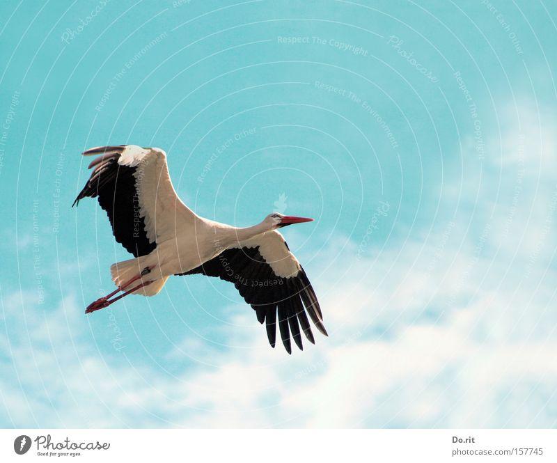 Hoch hinaus ruhig Ferne fliegen Geburtstag groß frei Ausflug Luftverkehr Feder Suche Frieden nah Afrika Schnabel Geburt Storch