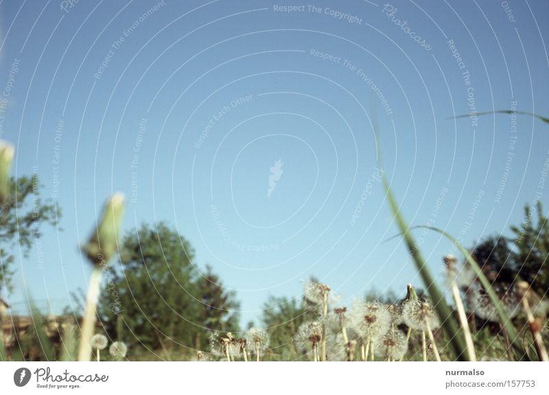 ich dann mal im Gras Rasen Löwenzahn Sommer liegen Boden Erholung Pause faulenzen Halm Wärme Sonnenbad Himmel Natur Gardesoldaten Spielen Freude