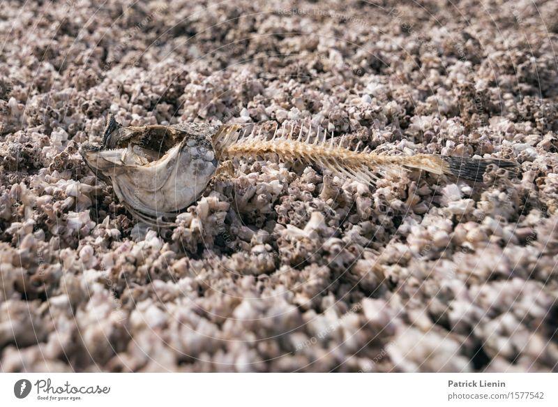 Dead Fish Leben Ferien & Urlaub & Reisen Expedition Sommer Strand Umwelt Natur Tier Dürre Küste See Wüste Wildtier Totes Tier Fisch 1 bizarr einzigartig Ende
