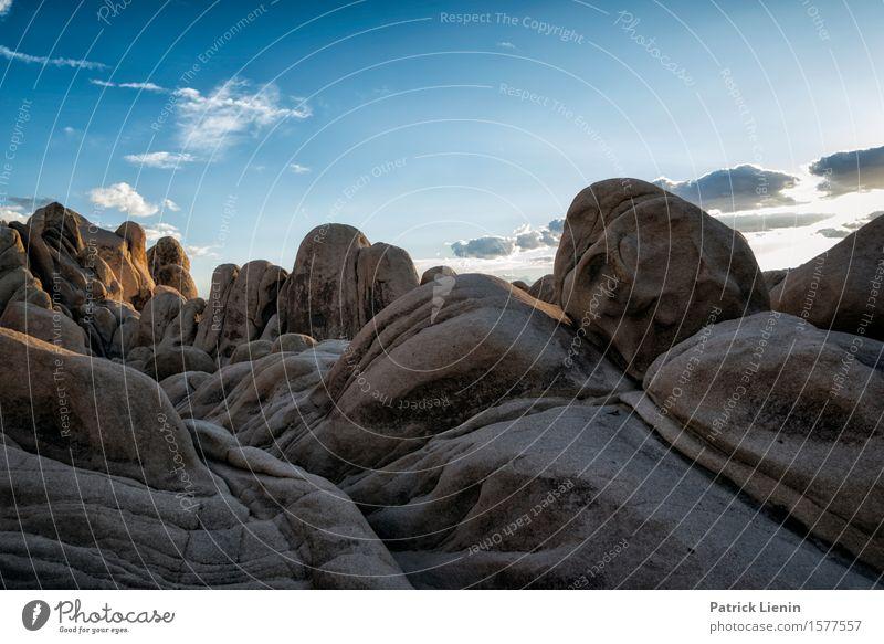 Joshua Tree National Park schön Leben harmonisch Wohlgefühl Zufriedenheit Sinnesorgane Erholung Ferien & Urlaub & Reisen Abenteuer Ferne Expedition Sommer