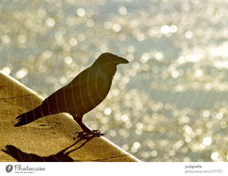 Hafen Wasser Sonne Vogel Krähe Aaskrähe Licht Aussicht Meer Ostsee Darß Sehnsucht warten Farbe Strand Küste
