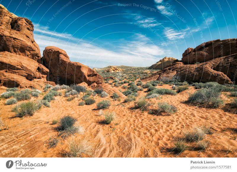 Desert View Himmel Natur Ferien & Urlaub & Reisen Pflanze blau schön Sommer Landschaft rot Wolken Ferne Berge u. Gebirge Umwelt Freiheit Felsen Horizont