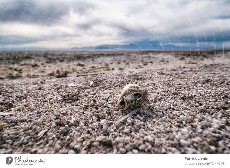 Dead Fish schön Leben Ferien & Urlaub & Reisen Abenteuer Ferne Expedition Sommer Strand Berge u. Gebirge Umwelt Natur Landschaft Urelemente Himmel Wolken
