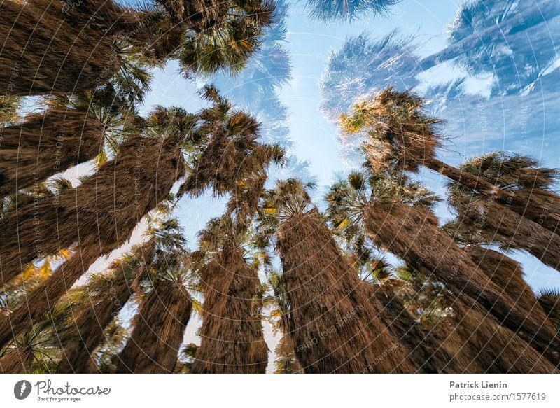 Wüstentraum schön Ferien & Urlaub & Reisen Abenteuer Expedition Sommer Berge u. Gebirge Umwelt Natur Landschaft Himmel Klima Baum Oase grün Kalifornien Südwest