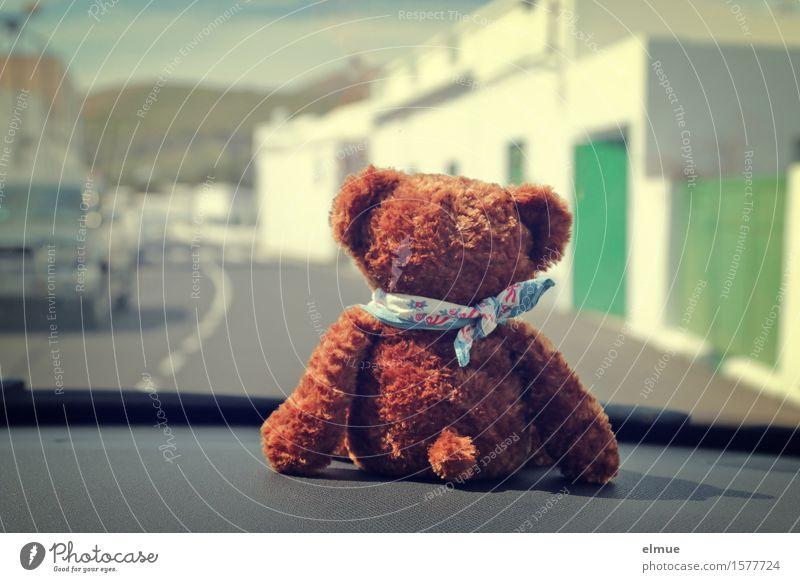 Teddy Per macht Urlaub (4) Ausflug Sightseeing Sommerurlaub Autofahren Straße Fahrzeug Teddybär Stofftiere Mitfahrgelegenheit Mitfahrer genießen Blick sitzen