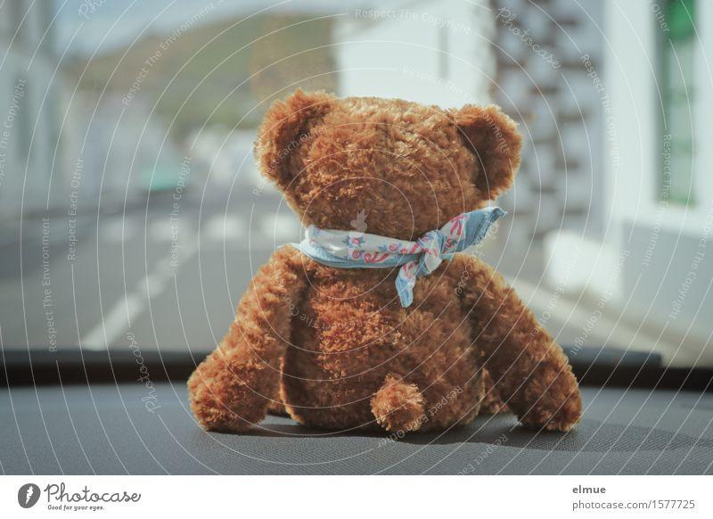 Teddy Per macht Urlaub (3) Ferien & Urlaub & Reisen Ausflug Abenteuer Sightseeing Sommerurlaub Autofahren Straße Teddybär Stofftiere beobachten Blick sitzen