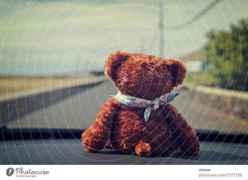 Teddy Per macht Urlaub (7) Autofahren Straße Spielzeug Teddybär Stofftiere Blick sitzen Glück kuschlig Freude Fröhlichkeit Lebensfreude Neugier Fernweh