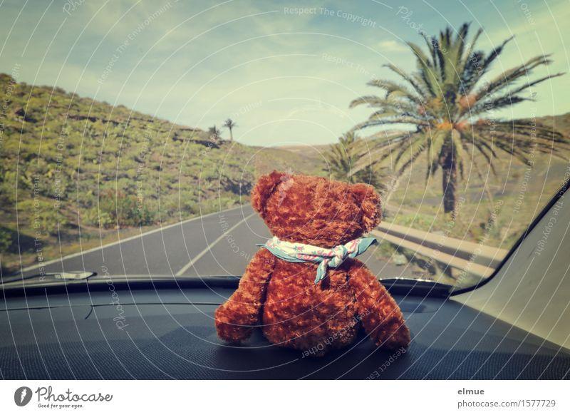 Teddy Per macht Urlaub (9) Ferien & Urlaub & Reisen Ausflug Abenteuer Sommerurlaub Palme Autofahren Straße Leitplanke Spielzeug Teddybär Stofftiere Horizont