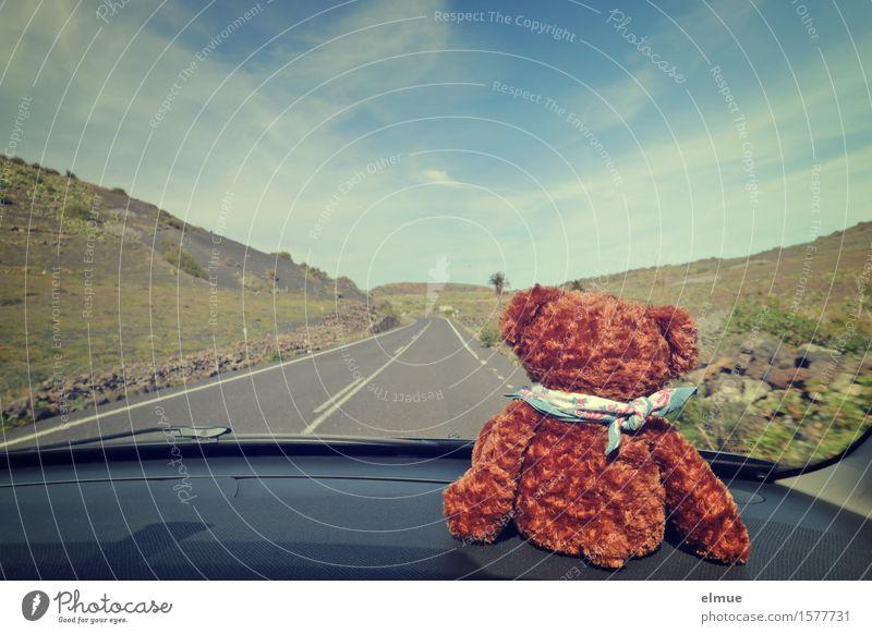 Teddy Per macht Urlaub (16) Ferien & Urlaub & Reisen Ausflug Ferne Sommerurlaub Himmel Wolken Autofahren Straße Teddybär Stofftiere Blick sitzen niedlich Freude