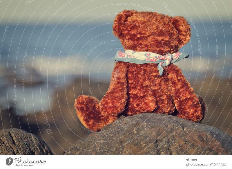 Teddy Per macht Urlaub (15) harmonisch Zufriedenheit Erholung ruhig Meditation Sonnenbad Meer Schönes Wetter Felsen Wellen Küste Teddybär Stofftiere Halstuch