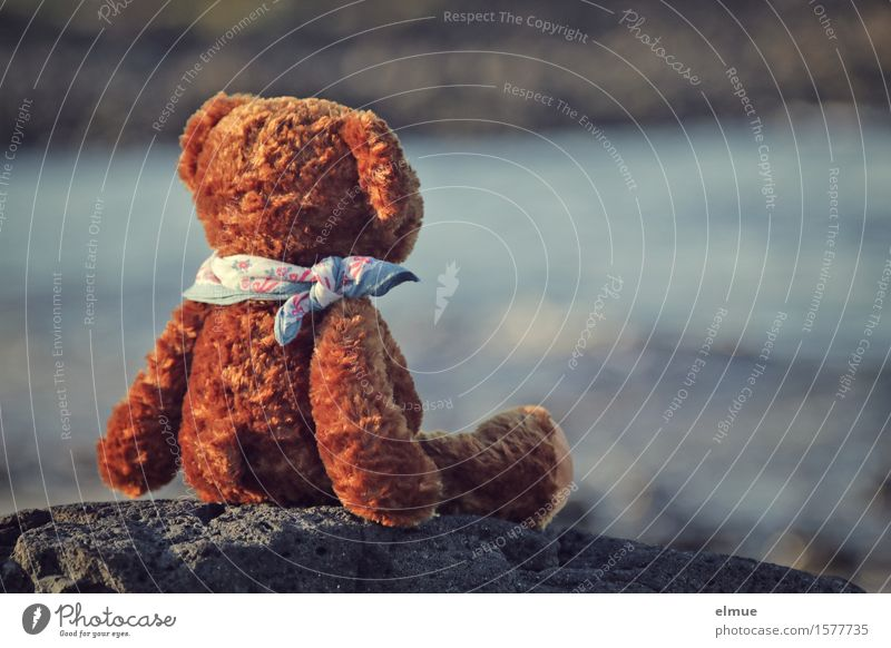Teddy Per macht Urlaub (13) Ferien & Urlaub & Reisen Ausflug Ferne Sommerurlaub Sonnenbad Wasser Küste Meer Teddybär Stofftiere Blick sitzen Glück klein braun