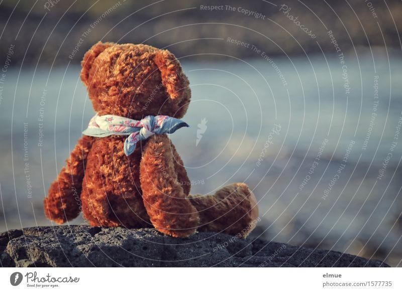 Teddy Per macht Urlaub (13) Natur Ferien & Urlaub & Reisen Wasser Meer Erholung ruhig Freude Ferne Küste Glück klein Freiheit Stein braun Zufriedenheit sitzen