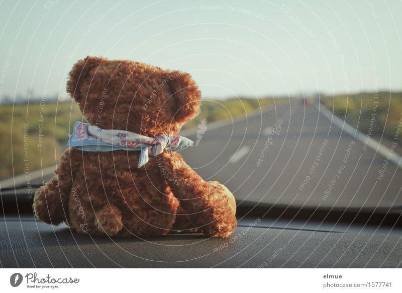 Teddy Per macht Urlaub (2) Zufriedenheit Erholung Ferien & Urlaub & Reisen Ausflug Abenteuer Ferne Sommerurlaub Landschaft Schönes Wetter Straße PKW Spielzeug