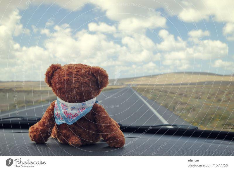 Teddy Per macht Urlaub (19) Ferien & Urlaub & Reisen Ausflug Ferne Sommerurlaub Wolken Schönes Wetter Autofahren Straße Teddybär Stofftiere Blick sitzen