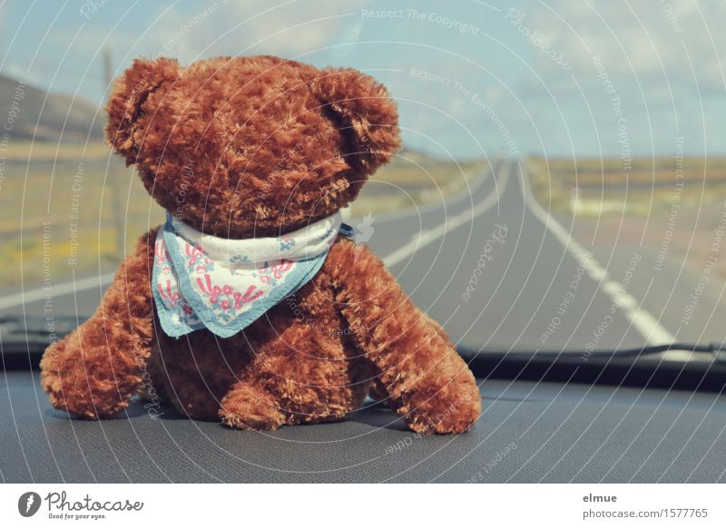 Teddy Per macht Urlaub (21) Ferien & Urlaub & Reisen Ausflug Abenteuer Ferne Freiheit Sommerurlaub Autofahren Straße Teddybär Halstuch Blick sitzen Freude Glück