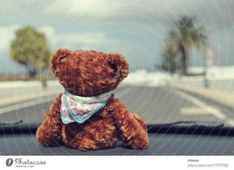 Teddy Per macht Urlaub (8) Himmel Wolken Palme Autofahren Straße Spielzeug Teddybär Stofftiere Halstuch Blick sitzen Zusammensein kuschlig Neugier niedlich