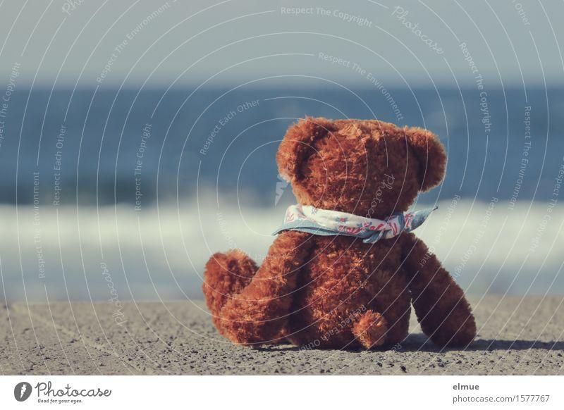 Teddy Per macht Urlaub (10) Wasser Himmel Horizont Schönes Wetter Küste Meer Spielzeug Teddybär Stofftiere Blick sitzen Freude Glück Zufriedenheit Lebensfreude