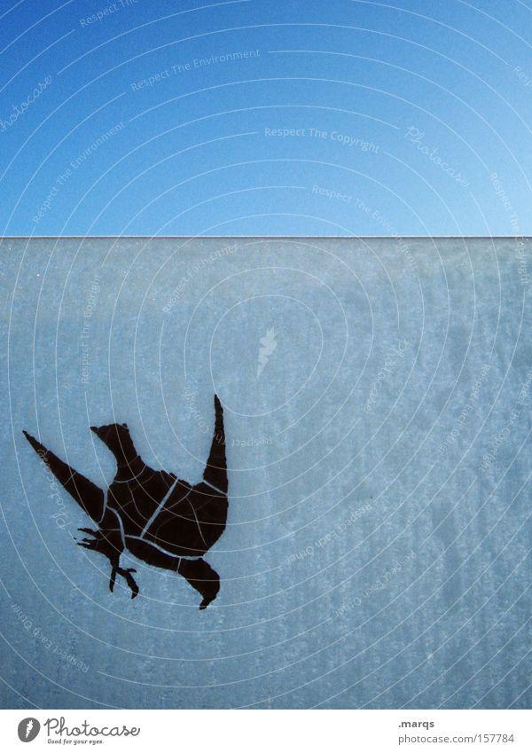 Mauersegler blau Tier Leben kalt Fenster Eis Vogel fliegen außergewöhnlich obskur gefroren Jagd Verfall Fensterscheibe Etikett