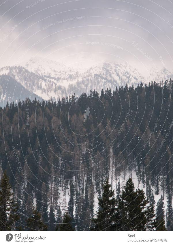Winterlandschaft Umwelt Natur Landschaft Urelemente Himmel Wolken Gewitterwolken Klima Wetter Nebel Schnee Schneefall Tanne Wald Hügel Alpen Berge u. Gebirge