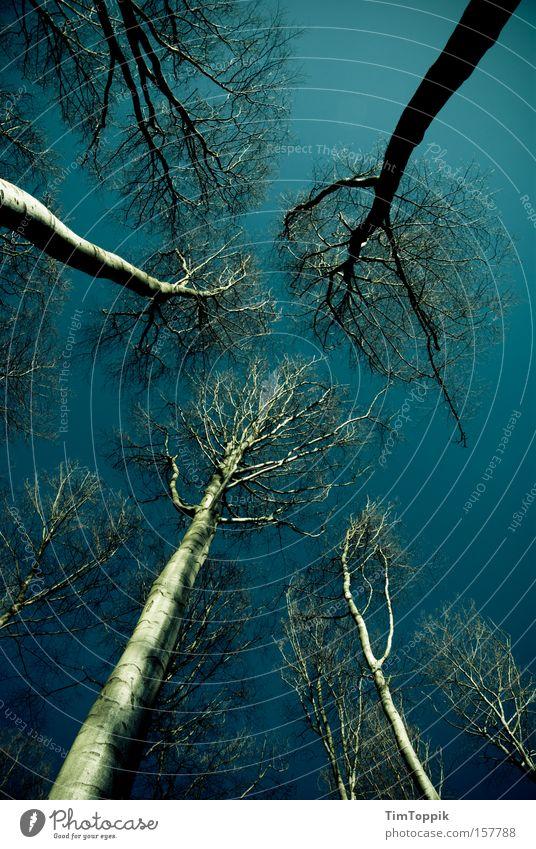 Into the wild wild wood 2.0 Baum Wald hoch Höhe dunkel Einsamkeit geheimnisvoll Hinterhalt Natur Ast Zweig Himmel blau mystisch Angst Panik spukhaft