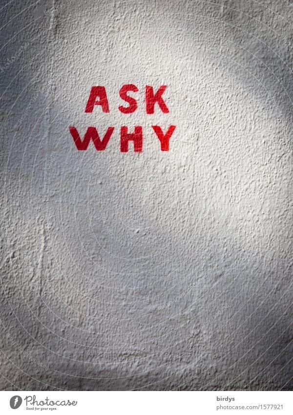 Hinterfrag es weiß rot Wand Graffiti Mauer grau authentisch ästhetisch Schriftzeichen einfach Zeichen planen Neugier Bildung Schmerz Leidenschaft