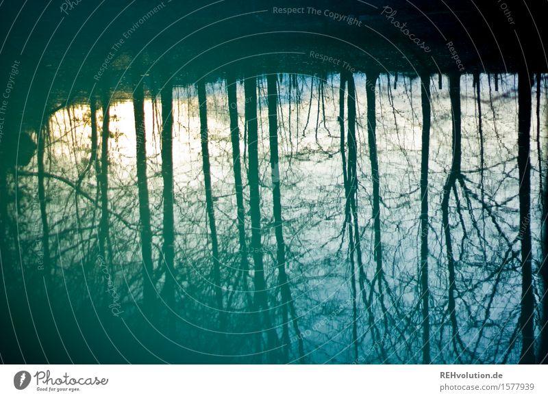 Spiegelung Umwelt Natur Landschaft Winter Baum Wald Teich See dunkel natürlich Gefühle Stimmung Sorge Trauer Farbfoto Gedeckte Farben Außenaufnahme