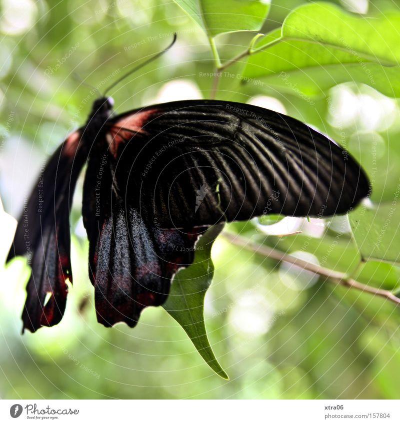 der frühling kommt trotz schnee schön Baum Blatt fliegen Luftverkehr Flügel Ast zart Schmetterling Lebewesen