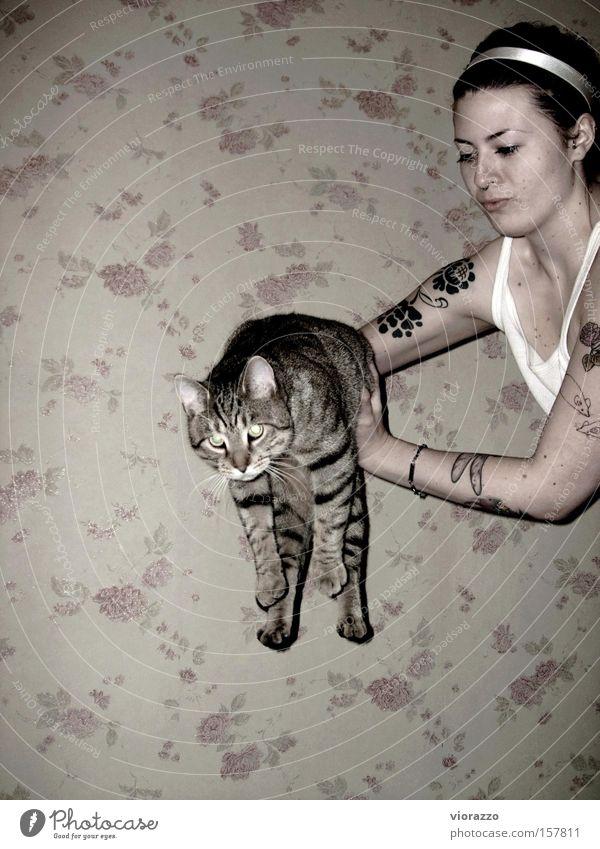 catwoman. Frau Wand springen Katze Luft fliegen Rose Luftverkehr Tattoo Säugetier Hauskatze Hausschuhe Schuhe