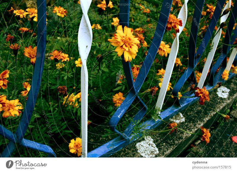 Am Gartenzaun Zaun altmodisch Leben grün Wiese Heimat Romantik Blume Blüte Blühend verschönern Schnörkel Freude Detailaufnahme Park anpflanzen