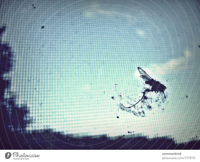 Tod mit Aussicht Himmel blau weiß Sommer Wolken Fenster Tod hell Erde Fliege Aussicht Platz Flügel Trauer Insekt Verzweiflung