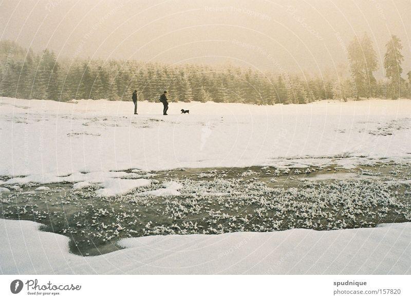 Frieden. Winter Schnee Feld weiß Wiese Wald Wasser frieren gefroren Eis Nebel Winterwald kalt